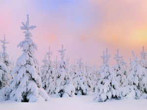 Noël, Noël... germany_feixi_terre_hill_dawn_morning_light_snow-covered_fir_desktop_wallpaper_1200x900-300x225